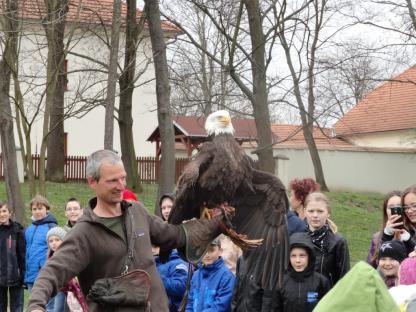 Orel bělohlavý s kořistí